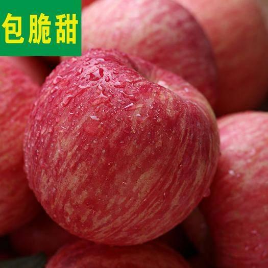 安陽縣 【壞果包賠】正宗紅富士冰糖心新鮮脆甜蘋果批發現摘現發水果