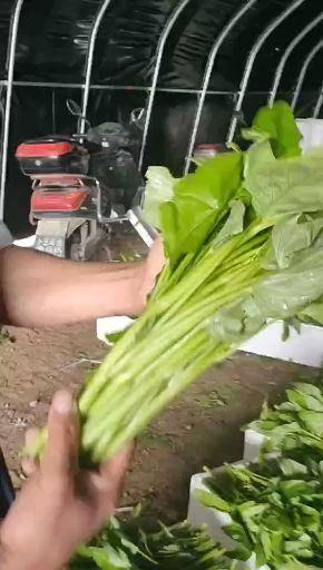 芜湖弋江区 空心菜美容养颜,需要的联系我