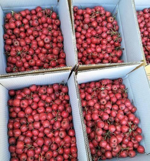 临沂平邑县 机器筛选大小 歪把红等山楂出售!保证果品品质和口味