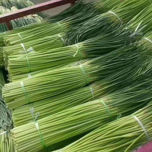 鄭州中牟縣 河南紅帽鮮蒜苔50到60cm超市專供當天發貨