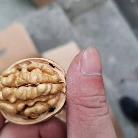 铜川宜君县 农家2019陕西 新品种纸皮,薄皮大核桃  支持货到付款