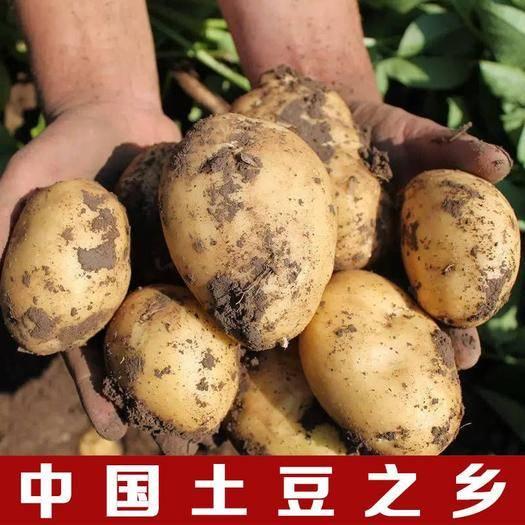 合肥 現挖新鮮土豆5/10斤黃皮土豆馬鈴薯洋芋精品土豆批發蔬菜批發