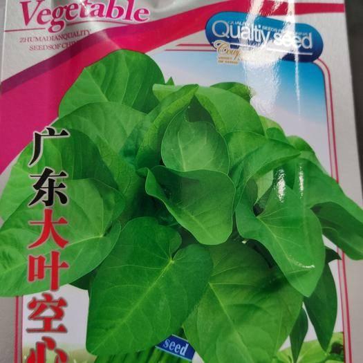 郑州中原区空心菜种子 广东大叶空心菜
