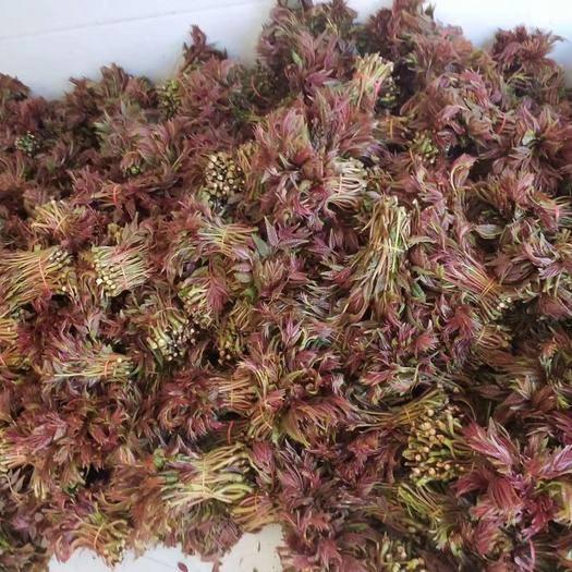达州大竹县红香椿芽 来看大竹