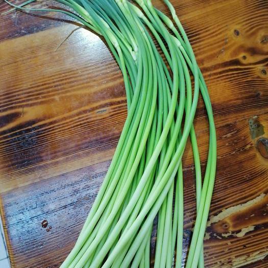 濱州惠民縣商河蒜苔 季節性蔬菜,4月中旬上市,尋找客商歡迎來電