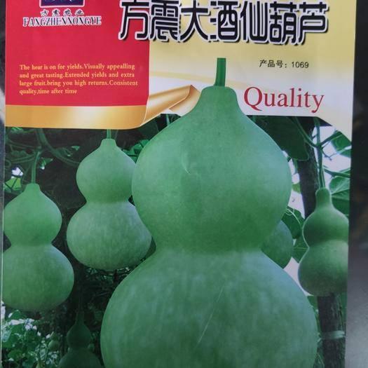 郑州亚腰葫芦种子 方震大酒仙葫芦