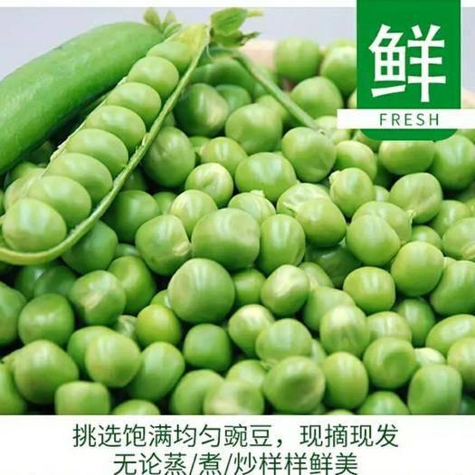 彌渡縣 新鮮豌豆現摘現發規格可選