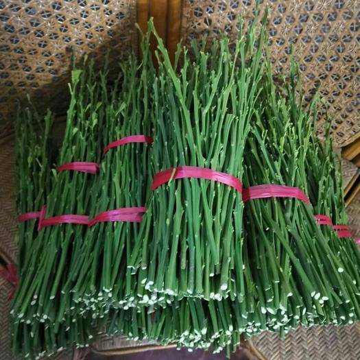 常德大分枝条 大分四号 由良  脆蜜金桔 媛红碰柑 明日见 红美人枝条芽条