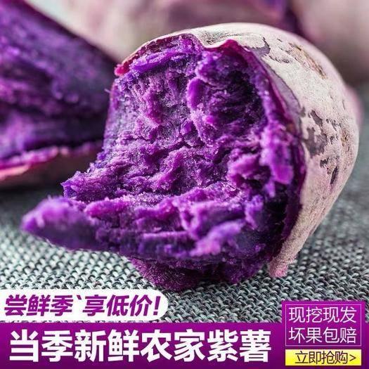 雷州市 農家紫薯新鮮紫心板栗紅薯新鮮生態番薯地瓜5/10斤