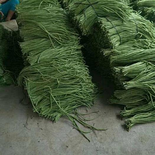 北海合浦县长豇豆 40cm~70cm