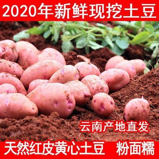 昆明 2020年云南高原新鮮現挖紅皮黃心土豆5斤10斤 洋芋馬鈴薯