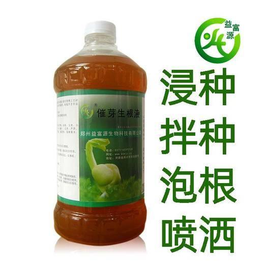 郑州 白芨种子 白芨种子专用 快速发芽 稀释五十倍浸泡喷洒