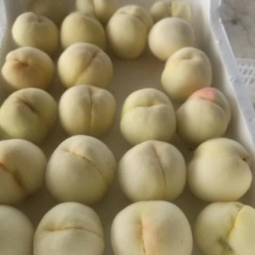 徐州新沂市新沂水蜜桃 春蜜,突围白凤,桃五大量供应