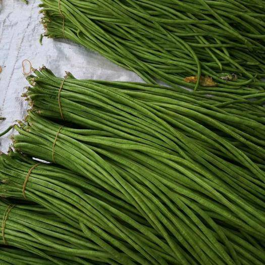 紅河縣 豇豆,長豆角