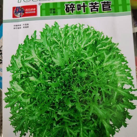 郑州苦苣种子 碎叶苦苣