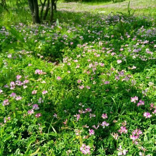 黄冈麻城市 紫云英蜂蜜