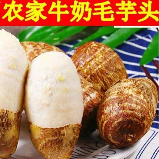 臨沭縣 新鮮現挖牛奶芋頭毛芋水芋 一件發貨包郵 下單選規格