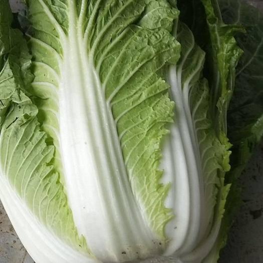 福清市 黄心大白菜