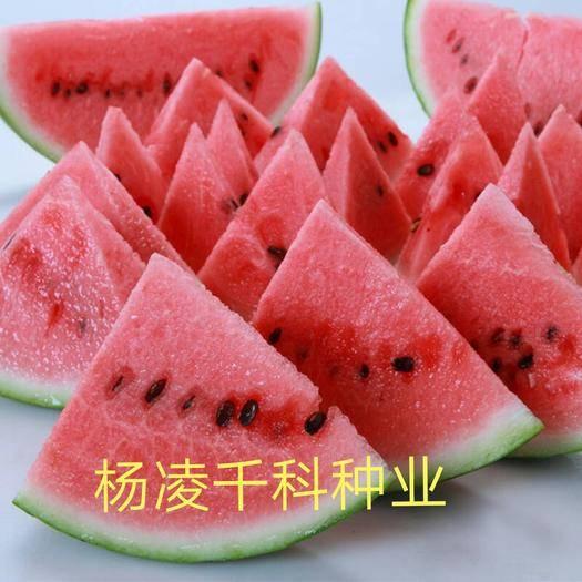 咸阳杨陵区早佳8424西瓜种子 抗裂8424,早熟,麒麟瓜,抗裂性强,品质极佳