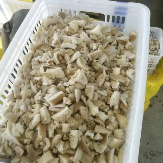 邯郸速冻平菇 平菇速冻块 盐泽菇 产地代加工