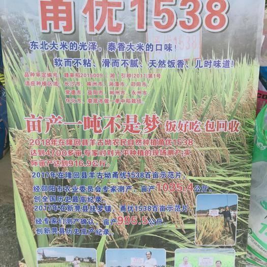 邵阳北塔区 甬优中国泰米高产2000斤杂交水稻种子 香稻 稻谷