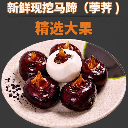 芜湖县 新鲜现挖马蹄大个荸荠地梨农家水果蔬菜带泥马蹄包邮