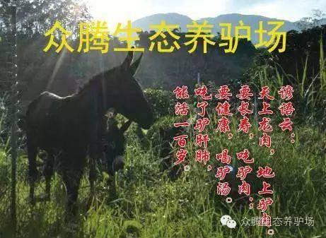 漳州华安县德州驴 200-400斤