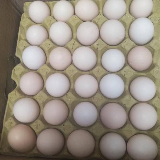 孝感漢川市 360枚凈重42斤粉蛋沒加紅!