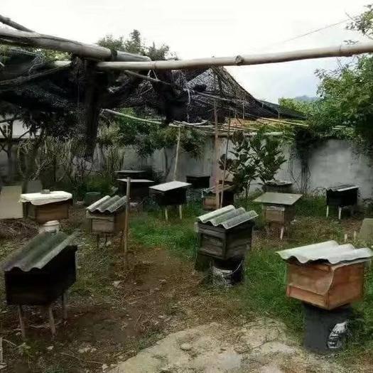 惠州惠东县 岭南的冬蜜叫鸭脚木蜂蜜