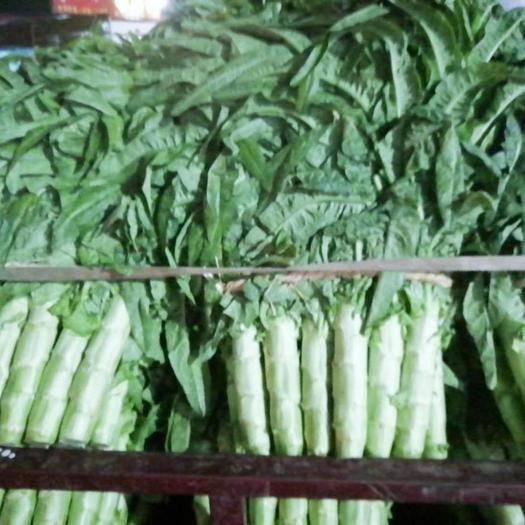 临沂兰陵县 精品红尖叶莴笋(青尖叶莴笋)万亩产地大量供应一手货源物流全国