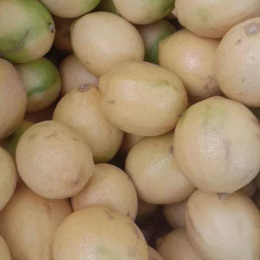 资阳安岳县 安岳黄柠檬多规格批发零售