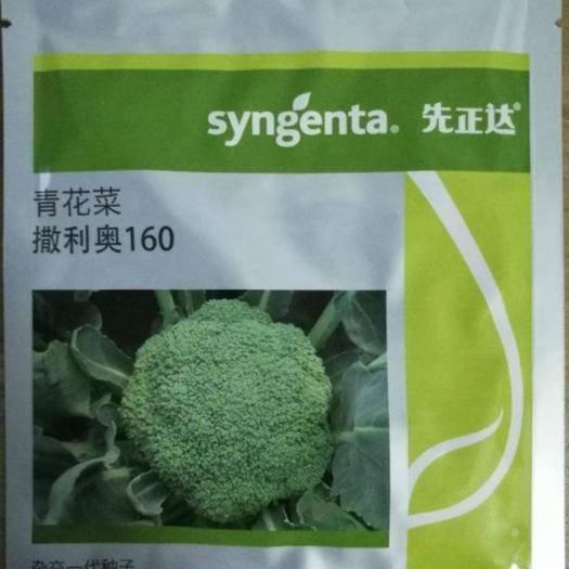 郑州二七区 普通西兰花种子先正达撒利奥160西兰花种子,抗性好,一亩地