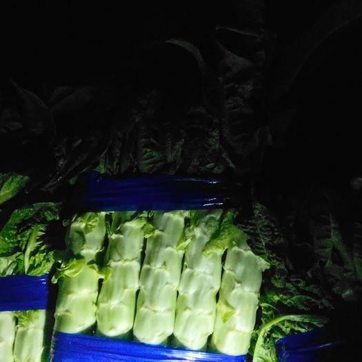 兰陵县红叶莴笋 精品大棚货,单颗2斤左右,无花无苔,质量保证