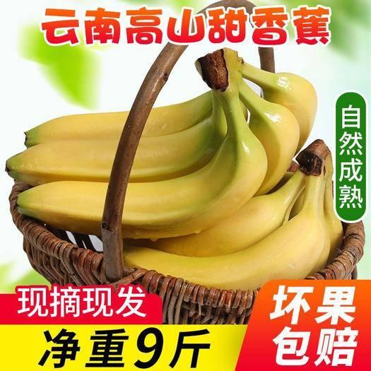 河口瑶族自治县 云南高山大香蕉带箱9-10斤