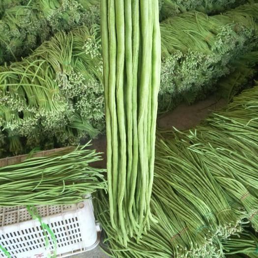 耿馬傣族佤族自治縣長豇豆 豇豆開始上市,質量好,數量足,歡迎老板們來進貨