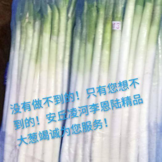 潍坊安丘市安丘大葱 30~50cm 净葱