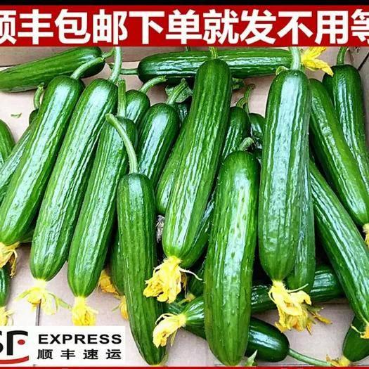 潍坊坊子区 新鲜水果黄瓜 一件发货顺丰包邮 下单选规格