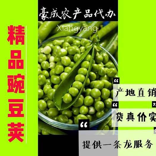 老河口市 新鮮 豌豆莢6~10cm