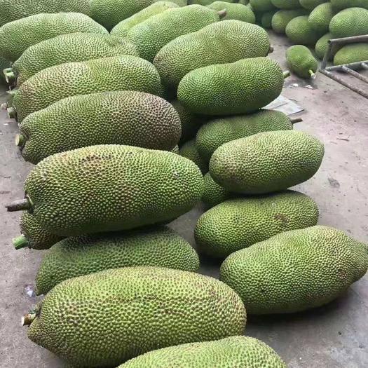 萬寧萬寧市 海南菠蘿蜜全國包郵喜歡直接下單長期供應合作批發零售
