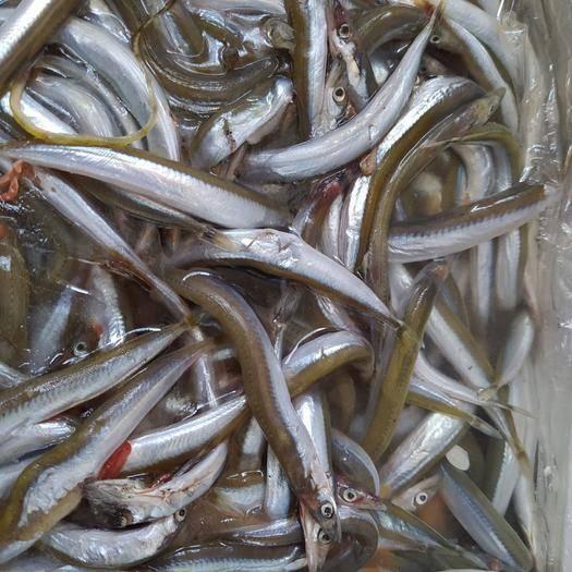 东营广饶县凤尾鱼 新鲜面条鱼,冰冻成板!保证质量,赢得市场