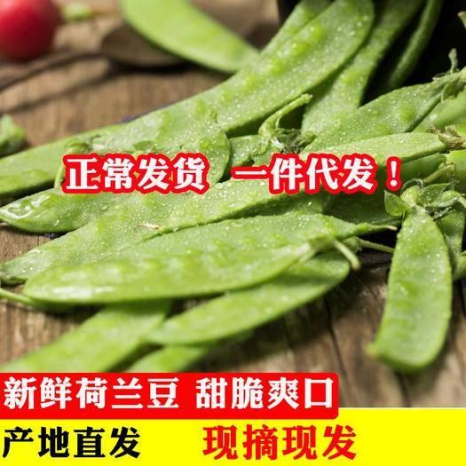 大理市 云南新鮮現摘甜脆青豆莢蔬菜荷蘭豆5斤包郵豌豆角農家豌豆四季