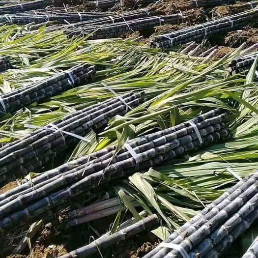 西林縣黑皮甘蔗 農村老家自種,都是用農家肥,無打藥、無化學、生態健康食品!