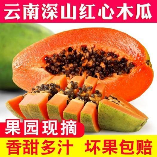 文山丘北縣 當季熱銷云南紅心牛奶木瓜非海南木瓜3/5/10斤一件代發