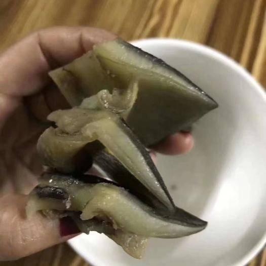 抚州南丰县 特价 8年生态老甲鱼水鱼团鱼,送礼佳品