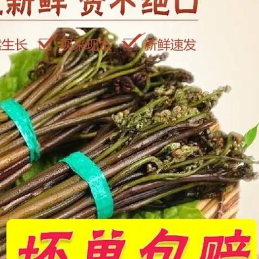 黔東丹寨縣 新鮮野地自長蕨菜 一件發貨包郵 下單可選規格