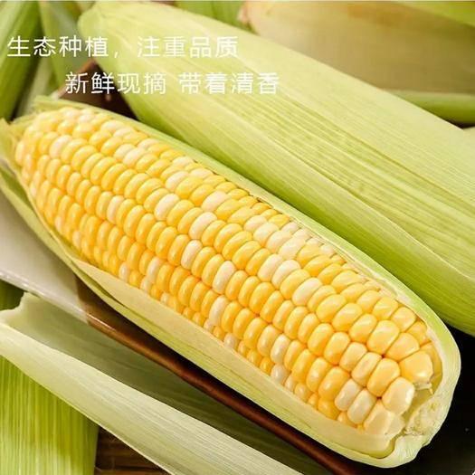 昆明 新鲜水果玉米 可以生吃 一件发货包邮 下单可选规格