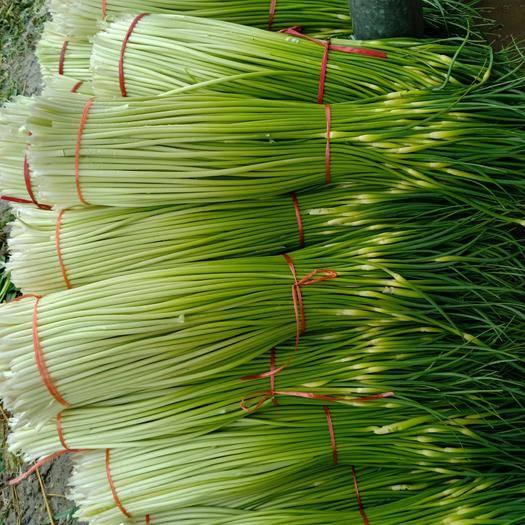 徐州豐縣 白帽蒜薹,質量很好,歡迎收蒜薹的客戶前來采購。