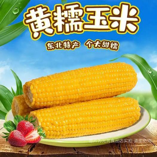 绥化甜糯玉米 新鲜甜黄玉米 一件发货包邮 下单选规格