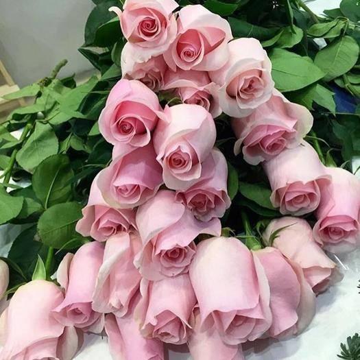 昆明官渡區 粉色玫瑰,
