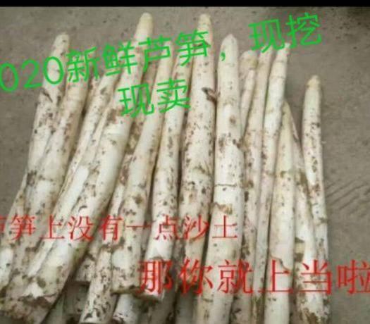 曹縣 精品蘆筍20-25cm